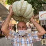 Turgutlulu çiftçinin yetiştirdiği dev kabaklar ilgi çekiyor
